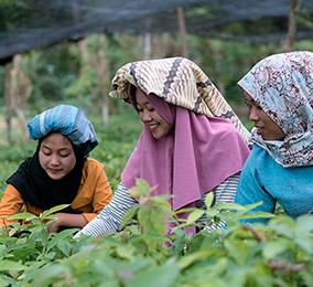 Foto de mujeres trabajando en los arrozales