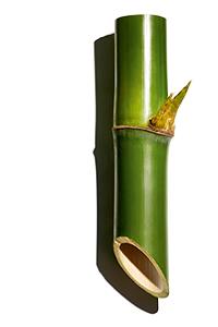 Poudre de bambou